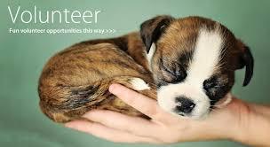 agape animal hospital agape animal rescue