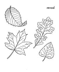Leaves Picture of Falling Leaves Coloring Pages