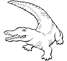 Alligators Coloring Pages Free Printable