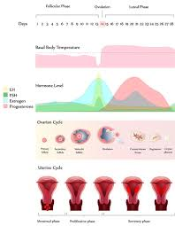 Thick Uterine Lining Shedding During Period by Loss Of Appetite During Period Things You Didn U0027t Know