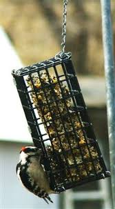 19 best Suet Bird Feeders images on Pinterest