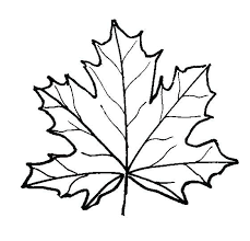 Free Printable Leaf Coloring Pages Together With Simple Maple Page Leaves Fall