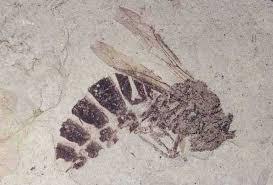 basic information florissant fossil beds national monument u s
