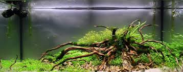 Get Excited And Make Something. | Page 4 | AquaScaping World Forum ... Hamsa Wabikusa Style Aquascaping World Forum Httpwww Nature Aquarium And Aquascaping Wiki 25l Nano Capa 2011 French Aquascapers Results My Scape Iaplc Rank 70 The Passing Of Legend Takashi Amano Magazine With Nicolas Guillermin Surreal Submarine Amuse Aquascape The Month August 2010 Beyond Riccardia Chamedryfolia Question This Is Ada 2009 Susanna Aquascape Garden Bonsai Plants
