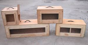 Our Crates Are Clearly Marked With Live Animal Stickers Crating Charge Is 3000 6500 Per Crate We Provide Enough Food And Moisture In Transit To Last
