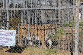 Iberville Parish   Free Tony The Tiger
