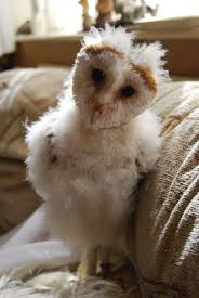 BARN OWL BABY STOCK 2 By Theshelfs On DeviantArt Barn Owl Facts About Owls The Rspb Bto Bird Ring Demog Blog October 2014 Chouette Effraie Lechuza Bonita Sbastien Peguillou Owl Free Image Peakpx Wikipedia Barn One Wallpaper Online Galapagos Quasarex Expeditions Hungry Project Home Facebook Free Images Nature White Night Animal Wildlife Wild Hearing Phomenal Of Nocturnal Wildlife Animal Images Imaiges
