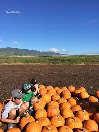 Pumpkin Patch Ct 2015 by Hawaii Mom Blog Aloun Farms 15th Annual Pumpkin Festival Last