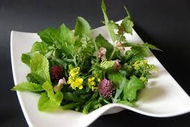 cuisine plantes sauvages cueillette et cuisine de plantes sauvages excideuil