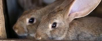 top 10 bunny dangers petplace