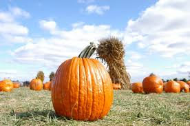 Pumpkin Patch Homer Glen Il by Pumpkin Patch Homer Glen How To Roast Pumpkin Seeds
