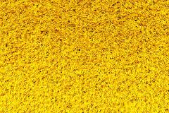 Yellow Carpet Texture Royalty Free Stock Photo