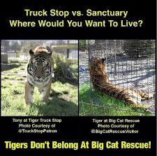Zoo Wars ~ Tiger Truck Stop V Sanctuary | Anti Animal Rights ... Live Tiger At Truck Stop Grosse Tete La 180 Out At The In Louisiana Stops Two New Animals Frustrate Activists But Local Infamous Owner Acquires More Exotic Animals For Display Yes There Really Is A Free Tony The Criminal Shdown Wunc Camel Now Famed Truck Stop Outside Baton Rouge Owner Roundup Tiger Back Headlines Another Kelty Jobyronkuhnercom