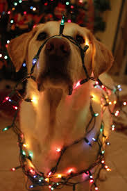 Christmas Tree Shop Danbury Holiday Hours by 76 Best Christmas Pets Images On Pinterest Christmas Pets