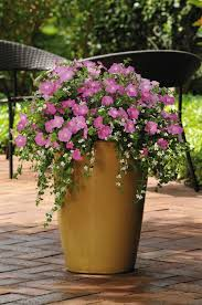 Silk N Satin Petunia And Snowtopia Bacopa They Just Continues To Put Out More Deck Flower PotsLarge