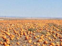 The Great Pumpkin Patch Pueblo Colorado by 22 Best Art Michael Bullock Images On Pinterest Fine Art