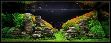 Colorful Aquascapes Pinterest