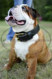 Reddy Kilowatt Lamp Storage Wars by 100 Small Non Shedding Dogs Uk Guard Dogs That Don U0027t