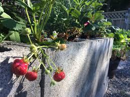 Grow a Garden Anywhere
