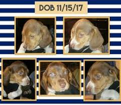 Find Puppies for Sale Dogs for Sale Dogs for adoption Dog