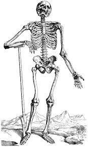 Printable Halloween Skeletons Fun For Christmas