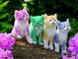 kitty cat cats best cat kitty cat vines