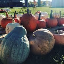Pumpkin Patch Durham North Carolina by Durham Farms Harvest Fest Oct 28 2017 Freehold Communities