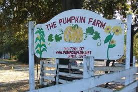 Auburn Pumpkin Patch by Annual Pumpkin Farm Attraction In Citrus Heights To Open Oct 1