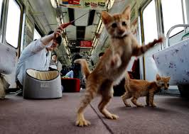 cat on cats on a japan railway lets stray cats roam to raise