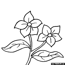 Lilac Flower Coloring Page