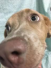 arnett animal hospital s web page