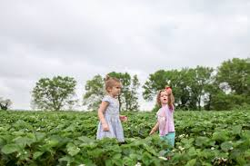 Pumpkin Patch Picking Lancaster Pa by Outdoor Activities Capitol Momma