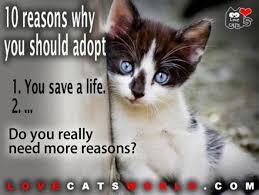 adopt a cat adopt a pet save a search pet adoption marketing