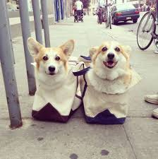 35 best Pembroke Welsh Corgis images on Pinterest