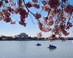 fleur et plante du lac images gratuites arbre plante lac rivière fleur de cerisier