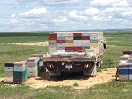 Supering | Glacier County Honey Co. Arnia Hive Monitors On Twitter Apimondia2017 Tech Tour Bee Lorry Bee Busters Truck Moving Bees Is Not Easy Slide Ridge Notes Video Driver Cited In Truck Crash 6abccom Brown Cat Bakery Transport Meet The Biobee Youtube Why Are So Many Trucks Tipping Over The Awl 14 Million Spilled I5 Everybodys Been Stung Honeybees Travel 1000 Miles To Pollinate Nations Crops Bbj Today 2018 Hino 817 4x4 Flat Deck