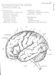 Human Brain Coloring Simple Book