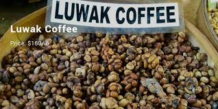Kopi Luwak Is The Type Of Coffee Bean Produced In Indonesia Part That It Fermented Through Consumption Digestion An Animal Call Or