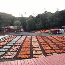 Pumpkin Farms In North Georgia by Burt U0027s Pumpkin Farm Home Facebook