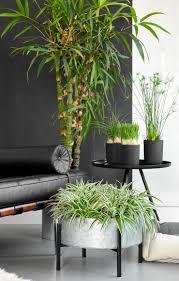 haustierfreundliche pflanzen in schicken dunklen töpfen