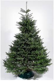 Nordmann Fir Christmas Trees Wholesale by Newer Christmas Tree Varieties Offer High Performance Wsj