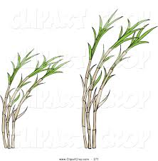 Sugar Plant Clipart Tree Cane