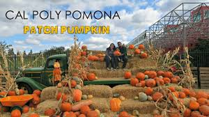 Petaluma Pumpkin Patch Corn Maze Map by Cal Poly Pomona Pumpkin Patch 2016 Youtube