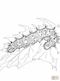 Butterfly Monarch Caterpillar Coloring Page Life Cycle Printable Free Archives Best