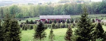 Wadsworth Ohio Christmas Tree Farm by Galehouse Tree Farms Marks 82 Years Business Thepostnewspapers Com