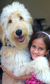 Large Non Shedding Dogs Pictures by The 25 Best Large Hypoallergenic Dogs Ideas On Pinterest St
