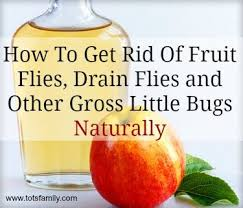 Little Flies In Bathroom Drain by Natural Insect Repellent For Fruit Flies Drain Flies And Other