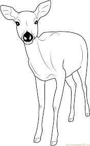 Deer Coloring Page Pages Printable Of Deers Free Book