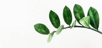 die besten luftreinigenden pflanzen für die wohnung mirohome