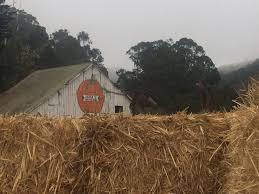 Pumpkin Patch Half Moon Bay 2017 by Top 10 Things To Do This Fall In The San Francisco Bay Area With